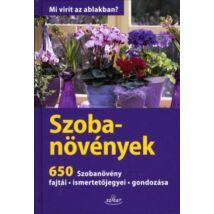 SZOBANÖVÉNYEK - 650 SZOBANÖVÉNY